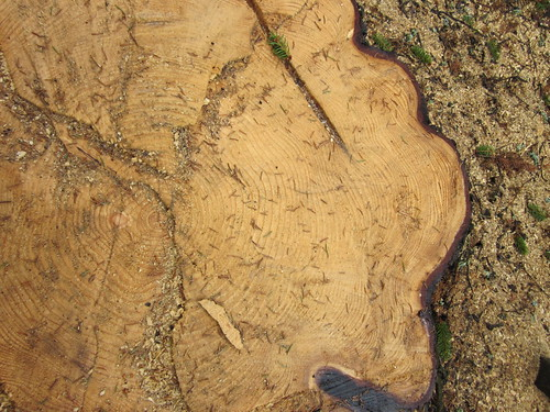 Puun historiaa by Anna Amnell