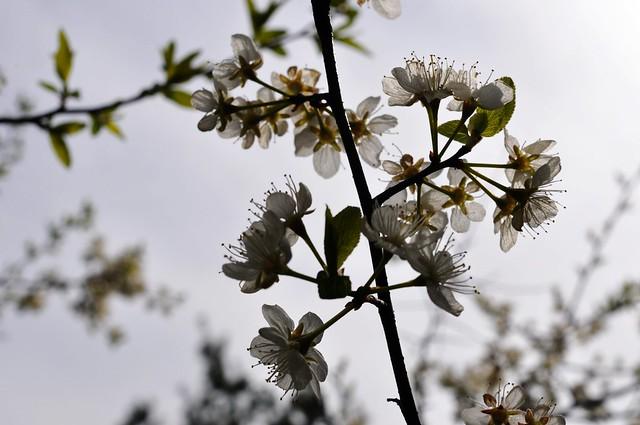 Guelph arboretum