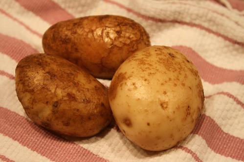 srping potatoes 005