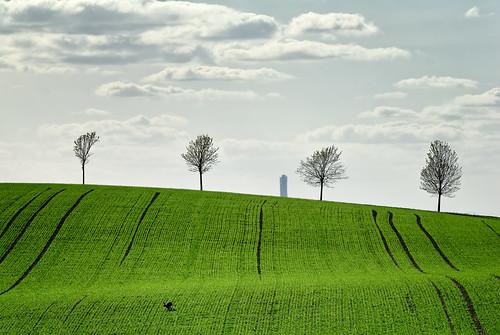 trees green field skåne spring nikon hare sweden d200 distant turningtorso höstsalong kyrka2012