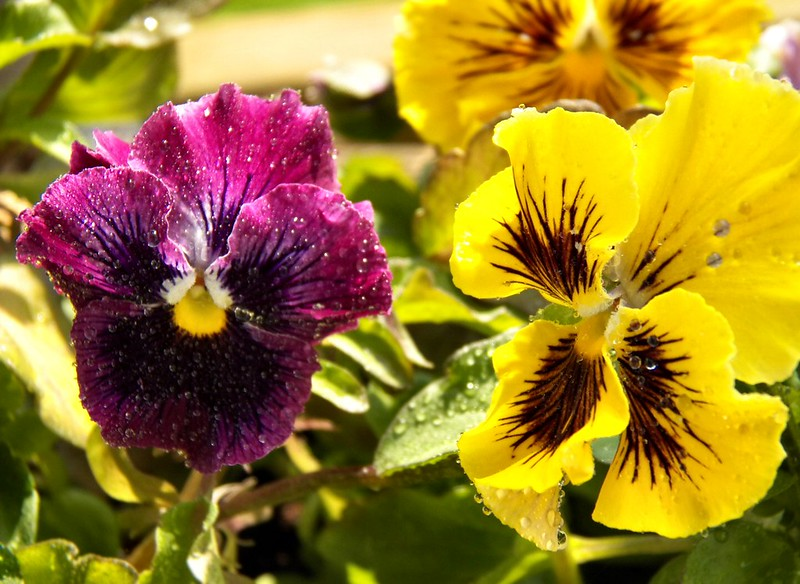 Flowers-After-Rain-1