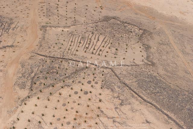 Azraq Kite 46 (Rees A)