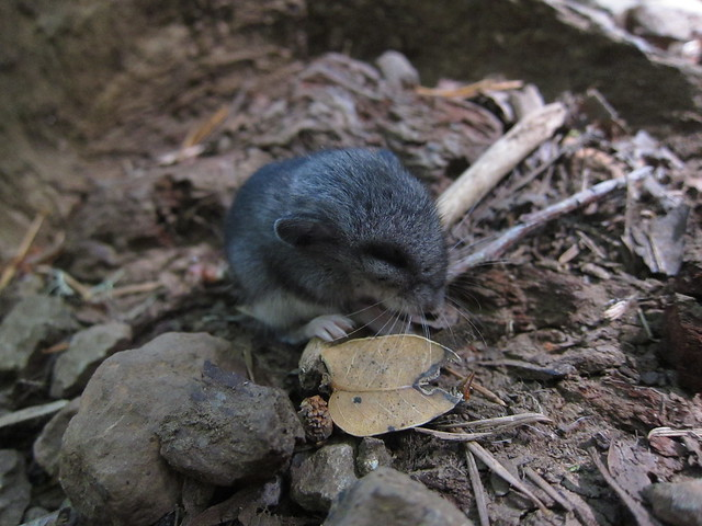 abandoned baby field mouse | Flickr - Photo Sharing!