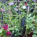 TRG_Plant01