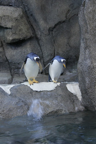 Penguins at Zoo by begineerphotos
