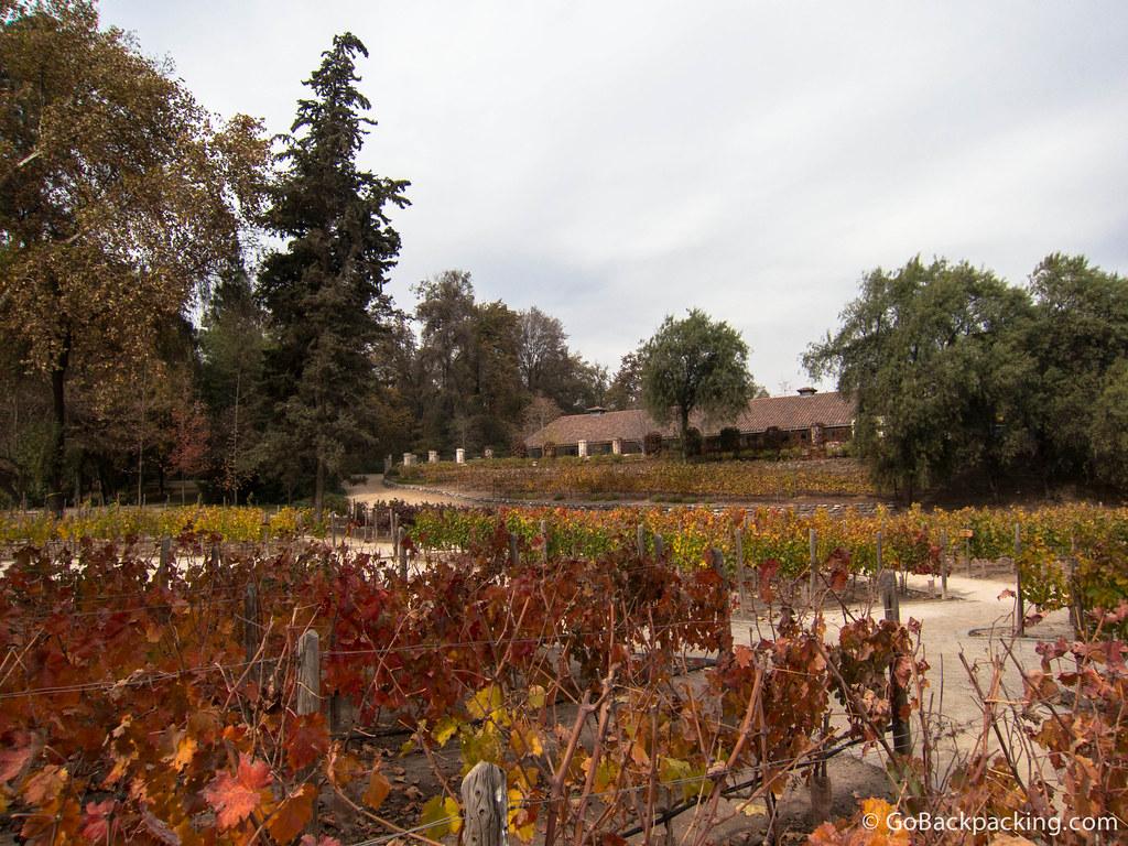 Vineyards at Concha y Toro