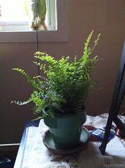 flowerpot, plant, houseplant,
