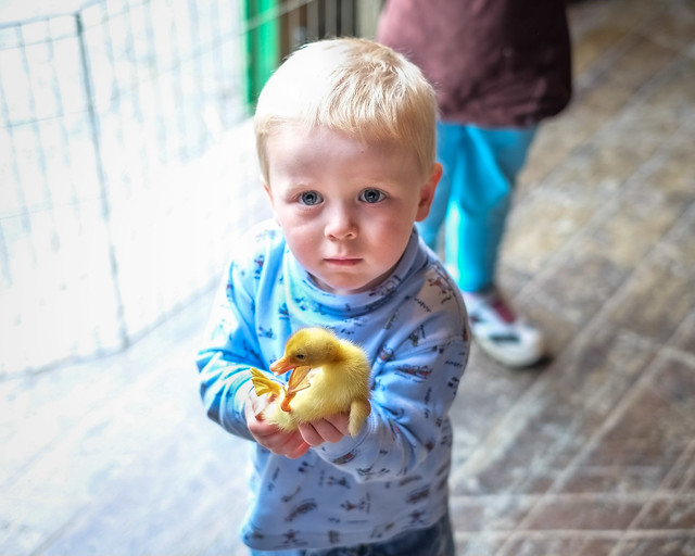 Baby Animals at Indian Ladder Farms - Altamont, NY - 2012, May - 01.jpg