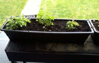 05-31-2012 Squirrelled Herbs 1