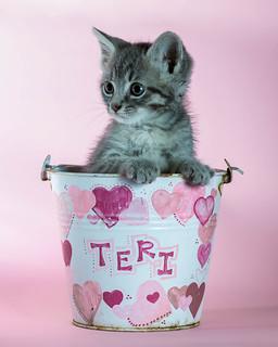 Bucket Kat