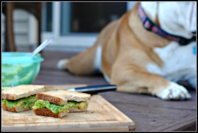 fooddog1