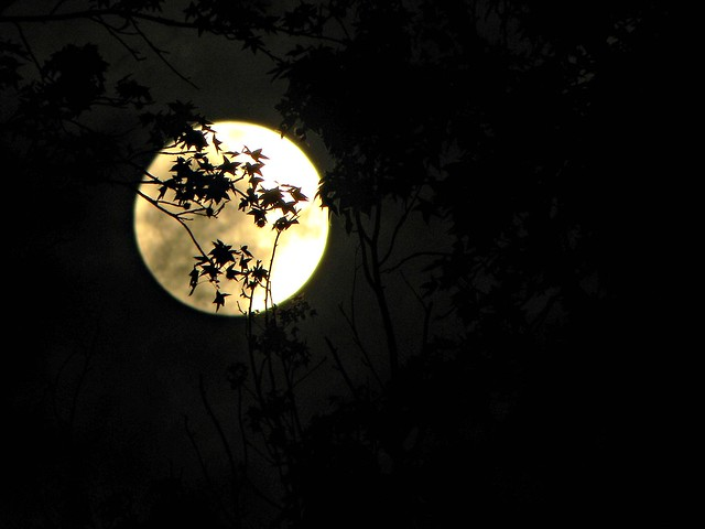 The Lure of a Full Moon