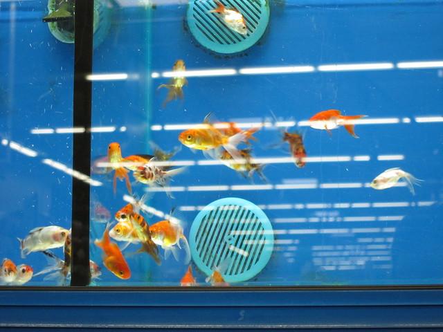 Fish at walmart car interior design for Fishing nets walmart