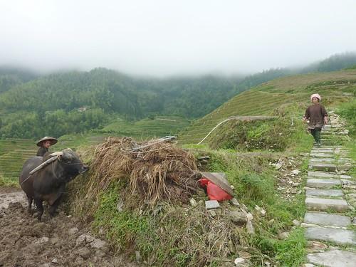 C-Guangxi-Pingan-Terrasse des 9 dragons (17)
