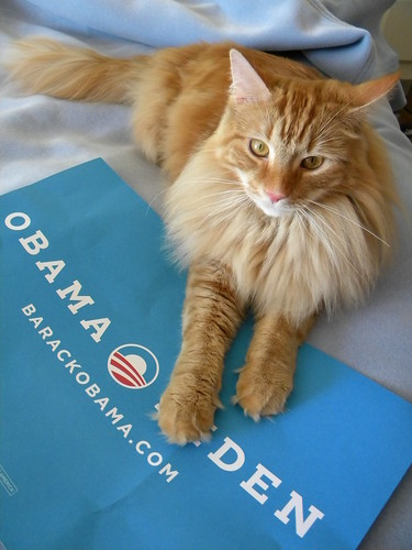 Handsome Obamacat