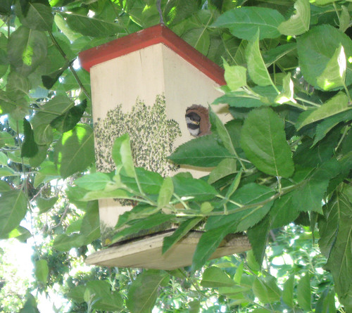 Litle bird in birdhouse, apple tree