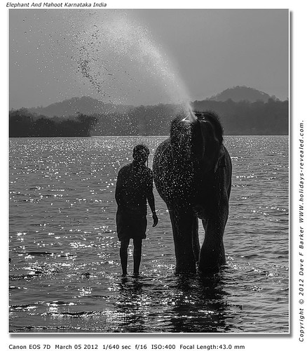 Elephant And Mahoot Karnataka India by Just Daves Photos