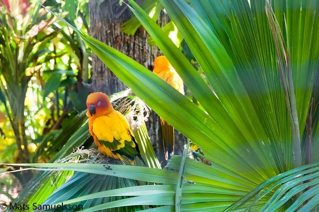 Bahamas_Nikon-99