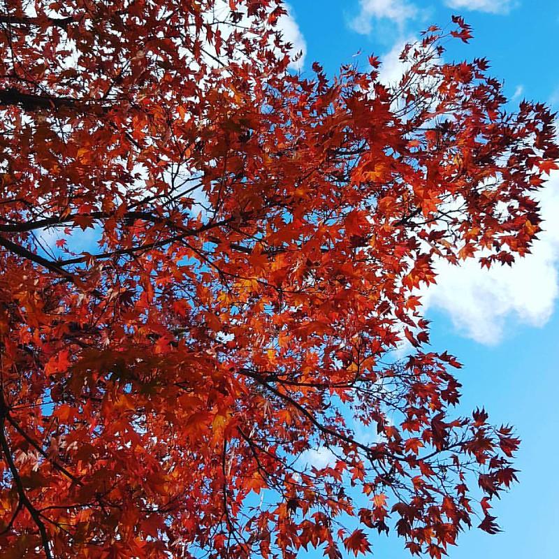 Fire in the sky... #autumn #newzealand #rotorua