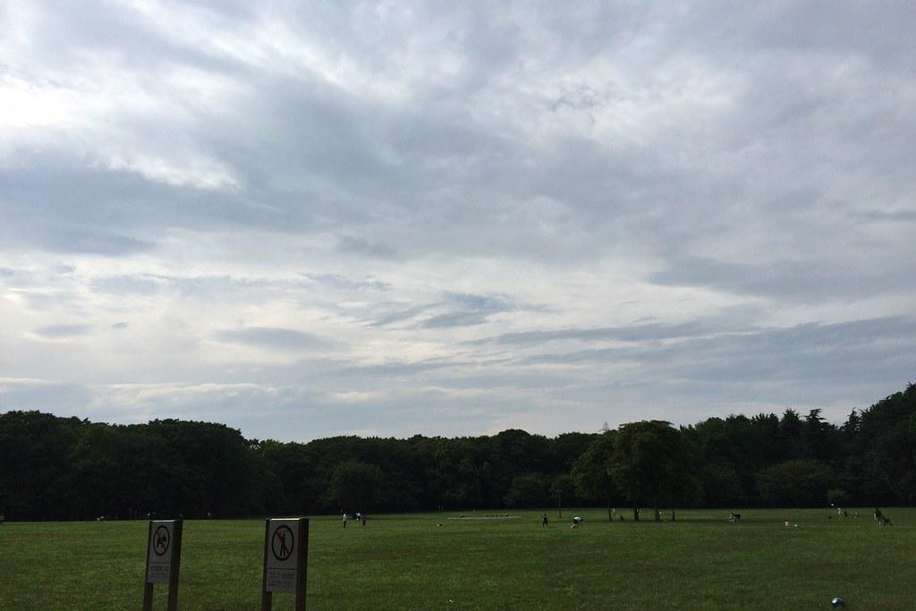 広い公園だ。