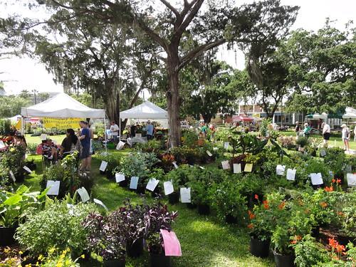 Plants at Plantfest 2012