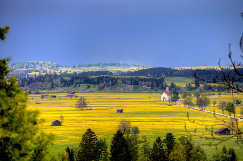 blue yellow germany landscape bavaria blossoms fields