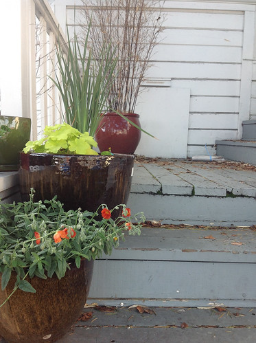 front porch plants