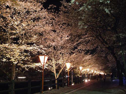 夜桜2012@大中公園(大和高田市)-05