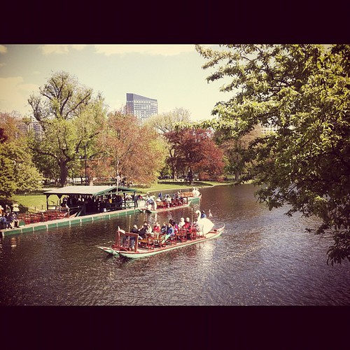 Swan Boats of Boston by stevegarfield