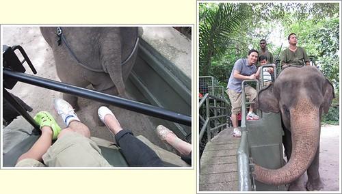 tile elephant ride
