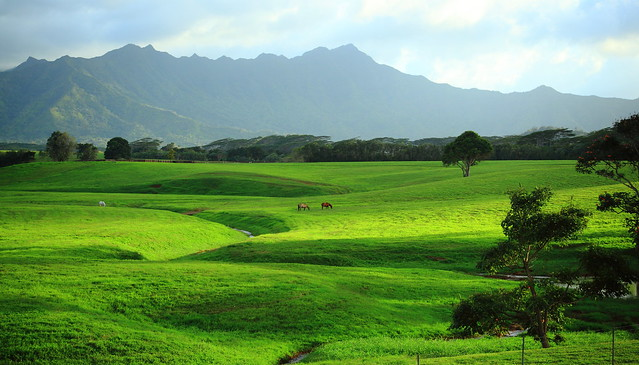 Green Fields of Kauai