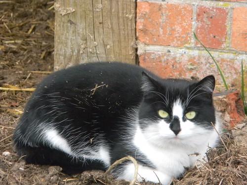 Disdainful cat