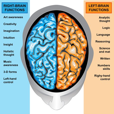 right brain functions vs left brain functions