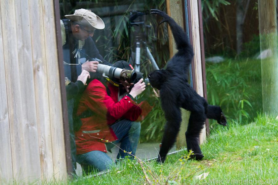 Sortie au Zoo D'amnéville le 05 Mai 2012 : Les photos 7148977551_037d7c0e4a_o