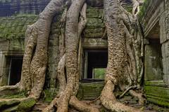 Root Window