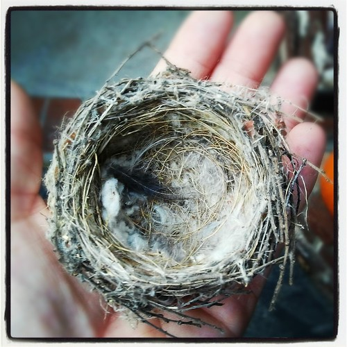 Tiny Bird Nest by Jodi K.