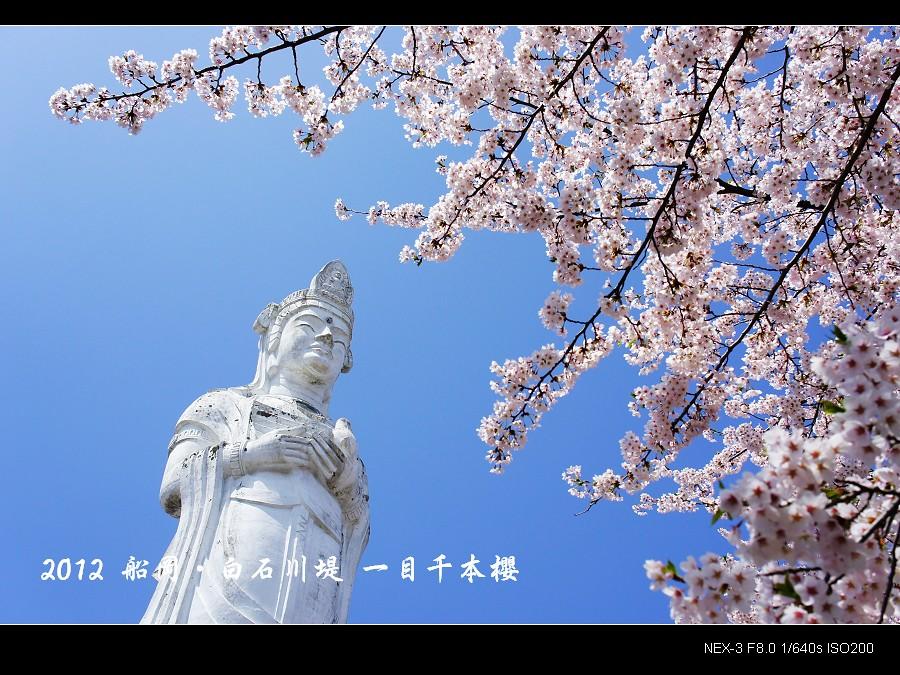 日本東北追櫻 Part II ~ 一目千本櫻