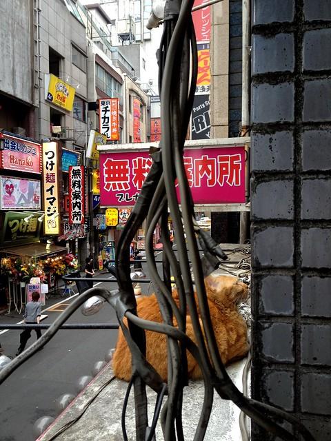 歌舞伎町の猫 - Kabukicho