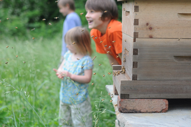 new bee orientation