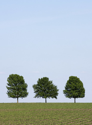 """Three Trees"" by Larry Troy"