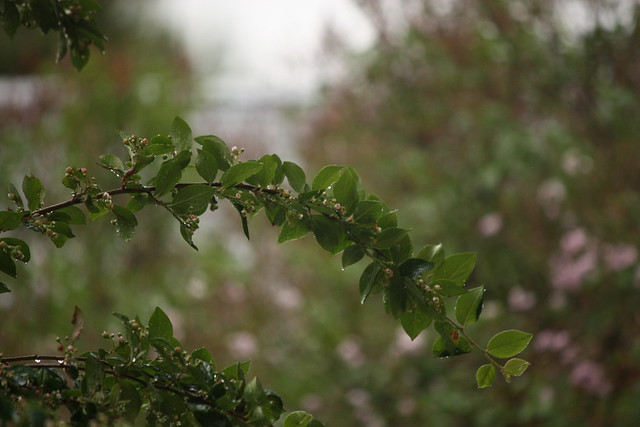 rain on branch