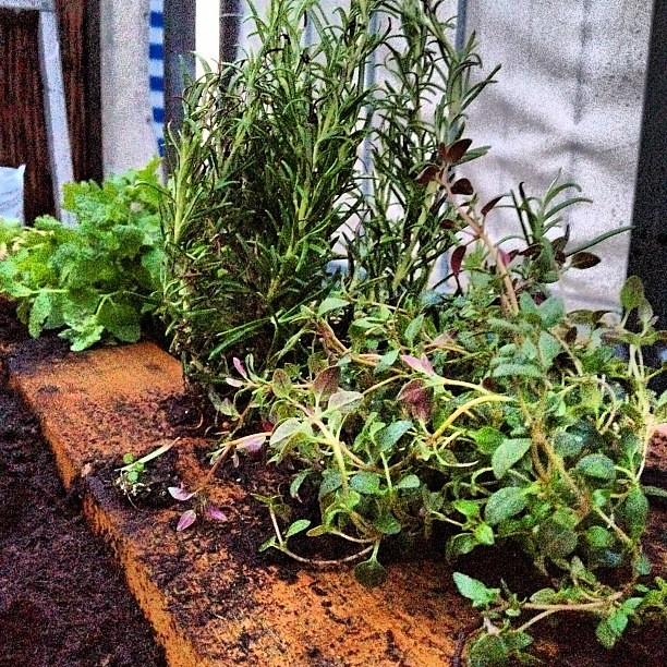 Using Ollas In Raised Beds