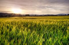 [フリー画像素材] 自然風景, 田園・農場, 朝焼け・夕焼け, 草原, 風景 - オーストリア ID:201205300600