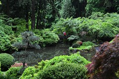 Portland Japanese and Chinese Garden