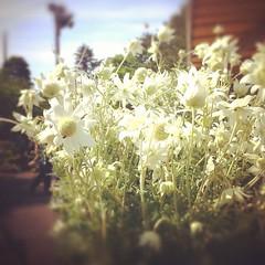 レトロカラーなお花
