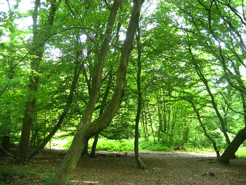 Dappled shade in Epping Forest