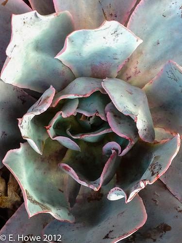 Edie's Road Trip: Succulent I