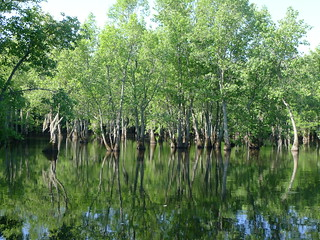 Sparkleberry Swamp Jun 2, 2012 10-12 AM