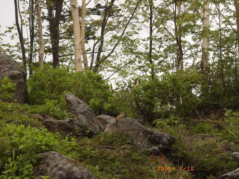 059黑岳松鼠