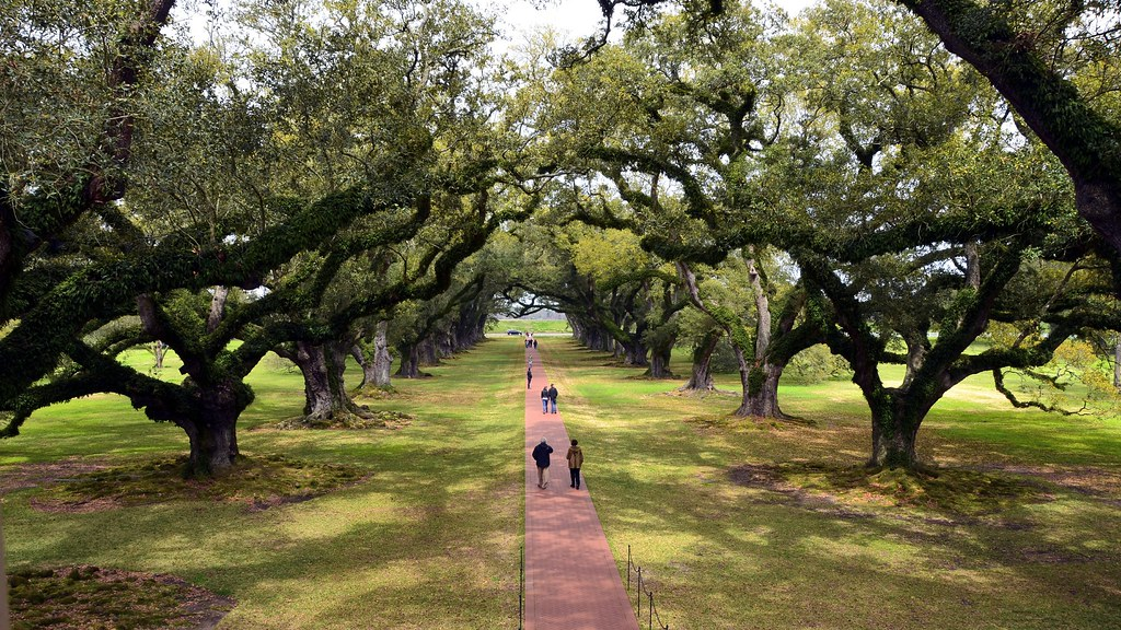 Beautiful Oak Alley Plantation